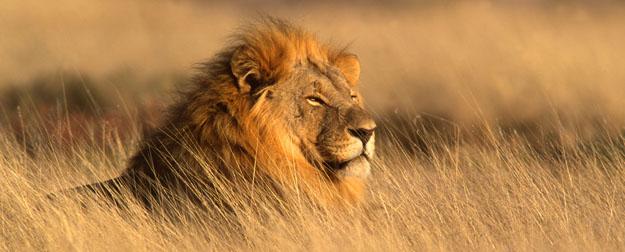 Safari For Lion Mac